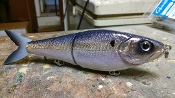 Hog Father Jr  Foiled Shad